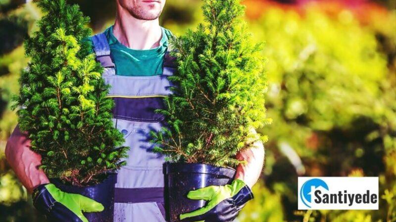 Bahçe İçin Ağaç Önerileri, Kokulu Bahçe Ağaçları Hangileridir?
