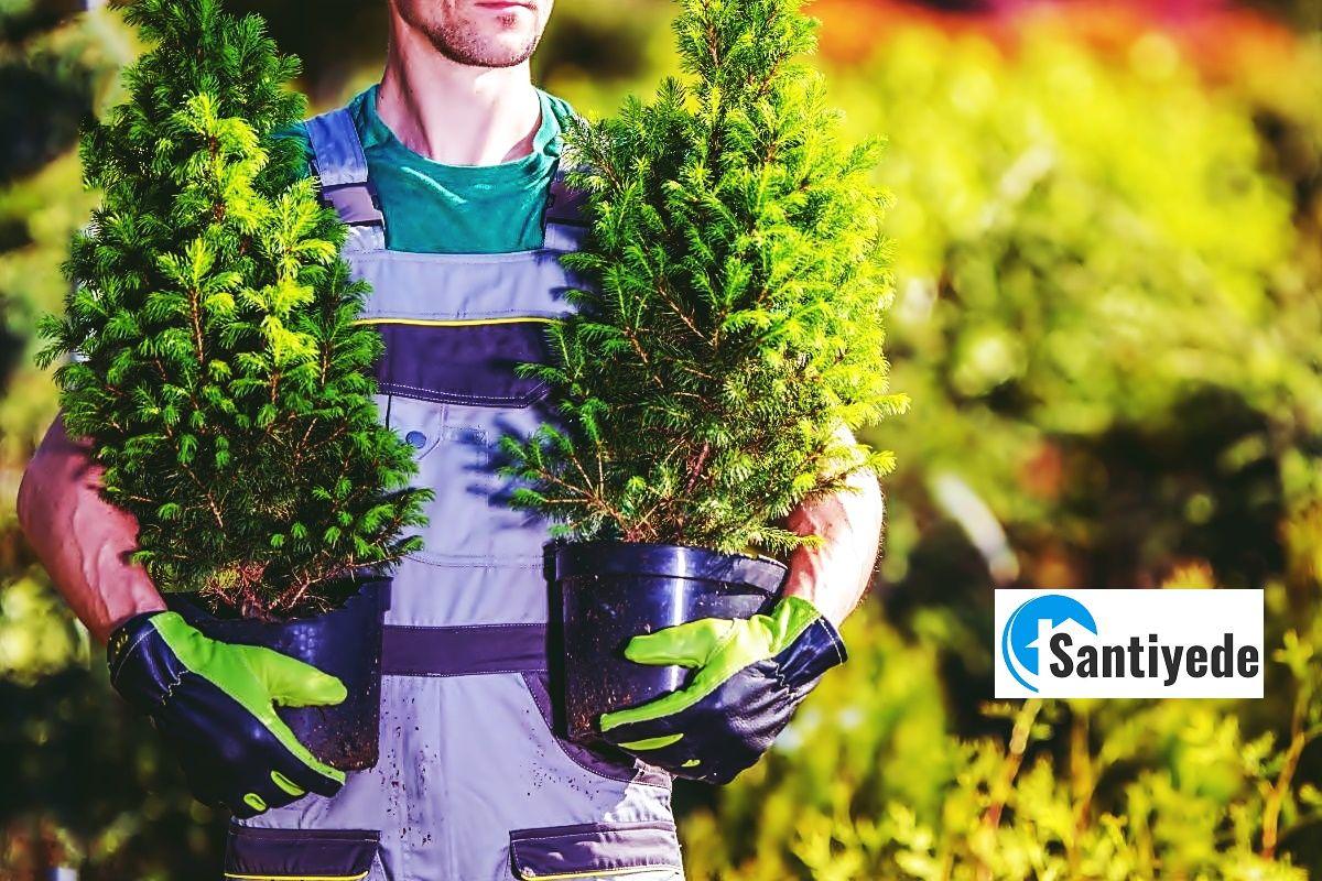 bahçe için ağacı önerileri