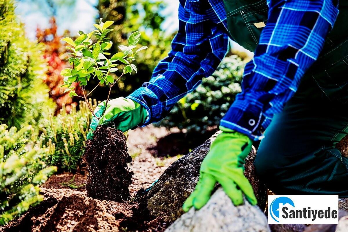 Bahçe için ağaç önerileri - kokulu ağaçlar