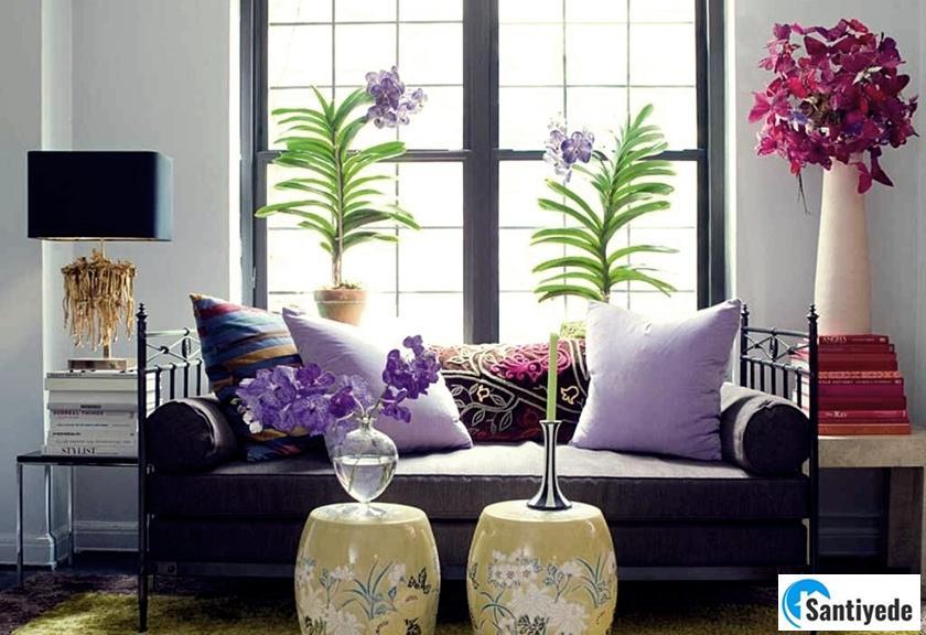 Çiçek ve Bitkiler ile ev dekorasyonu