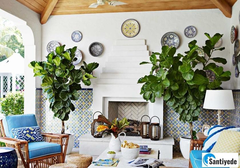 Yazlık evde canlı bitki