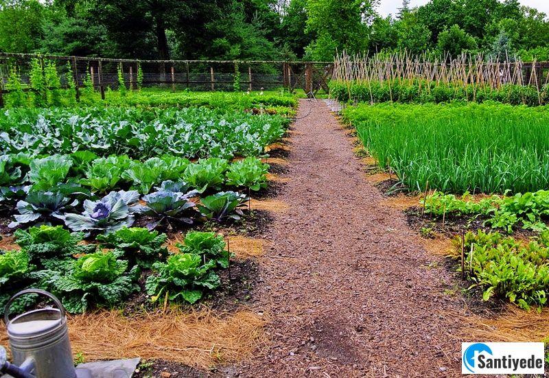 Sebze bahçelerinde güneş faktörü