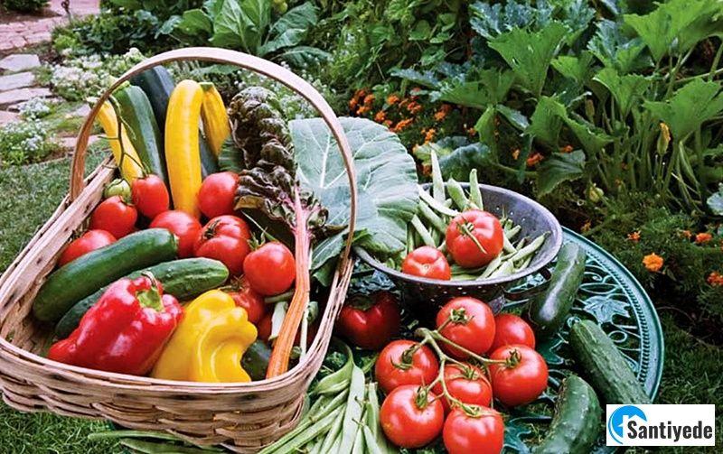 Sebze bahçesinde ne yetiştirilmeli