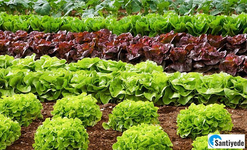 Sebzelerin rahat sulanması için önlem