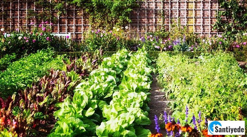 Sebze Bahçesi Nasıl Düzenlenir? Sebze Bahçesi Düzeni