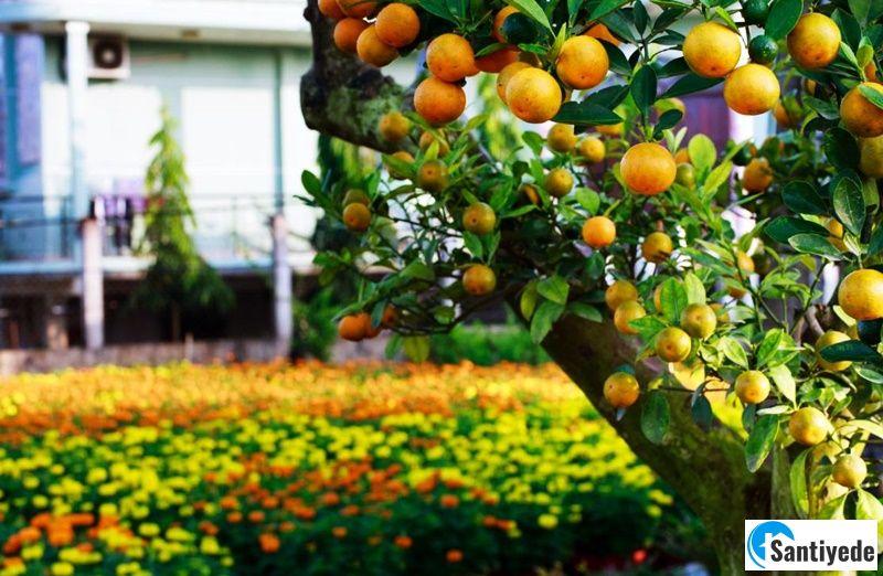 Bahçe düzenlemesi yapılmasında meyve ağaçları