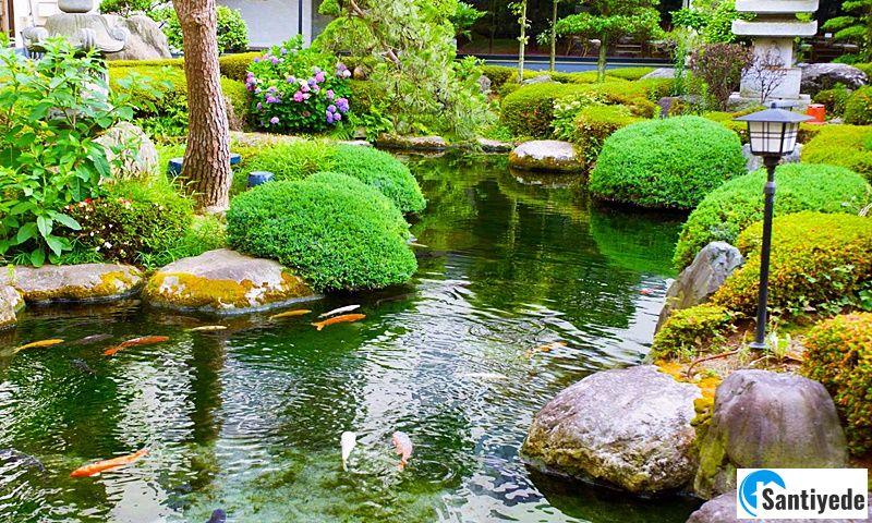 Bahçede süs havuzu ve çiçekler