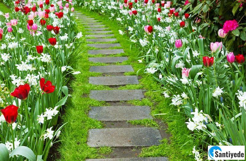 Çiçekli yürüyüş yolu