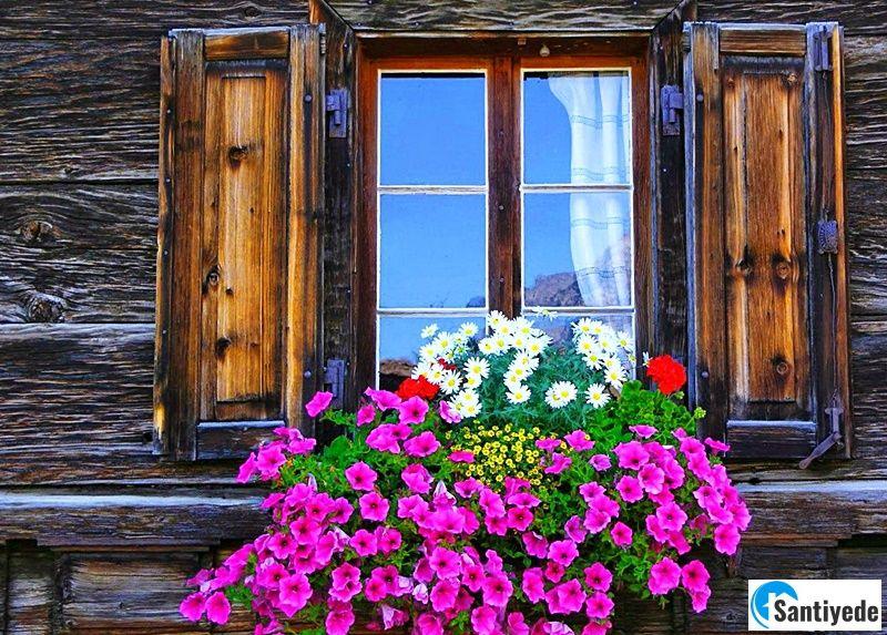 Pencere önü çiçekler ile bahçe düzenlemesi