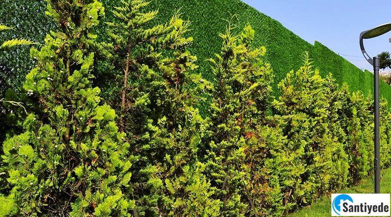Çim Duvar Uygulayarak Bahçelerinizde Fresh Bir Hava Yakalayın